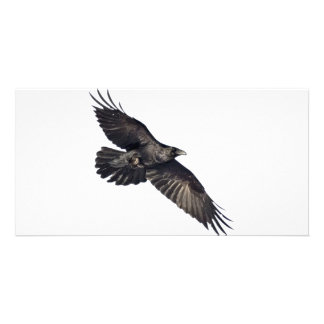 Flying Crow Photo Greeting Card