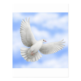 Flying Dove Postcard