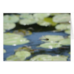 flying dragonfly greeting card