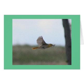 Flying Dusky Flycatcher Cards