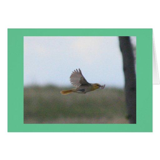 Flying Dusky Flycatcher Greeting Card