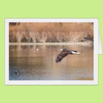 Flying Eagle, Atascadero Lake Park. December 2017 Card