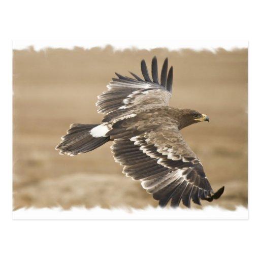 Flying Eagle Bird Postcard