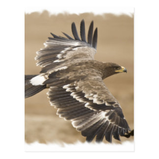 Flying Eagle Bird Postcard