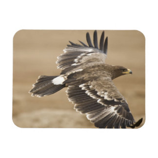 Flying Eagle Bird Premium Magnet Flexible Magnets