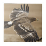 Flying Eagle Bird Tile