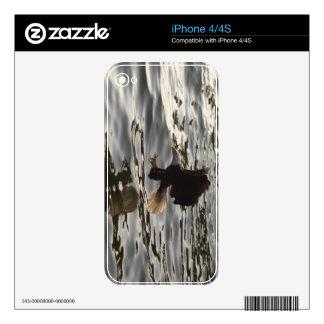 Flying Eagle Fishing 7 Wildlife iPhone 4 Skin