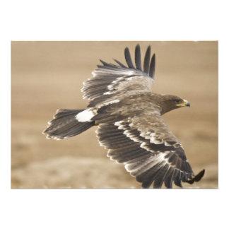 Flying Eagle Invitation
