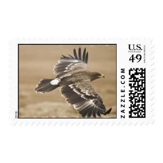 Flying Eagle Postage Stamp