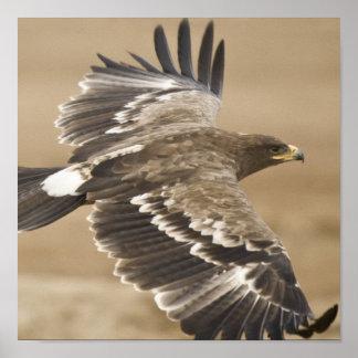 Flying Eagle Poster Print
