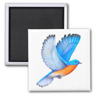 Flying Eastern Bluebird Magnet
