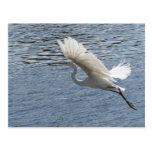 Flying Egret Post Card