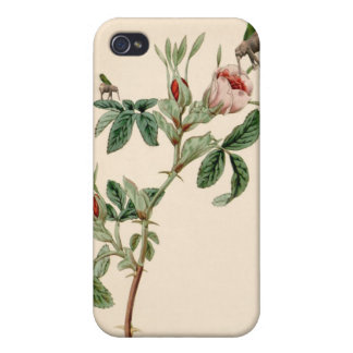 Flying Elephant above rose - beautiful love messag Cover For iPhone 4