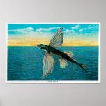 Flying Fish at Catalina Island Posters