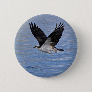 Flying Fish Eagle Osprey Nature Photograph Button