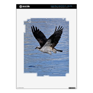Flying Fish Eagle Osprey Nature Photograph iPad 3 Decals