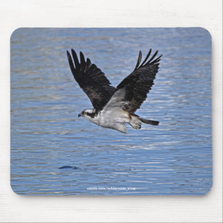 Flying Fish Eagle Osprey Nature Photograph Mouse Pad