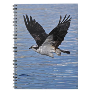 Flying Fish Eagle Osprey Nature Photograph Note Book