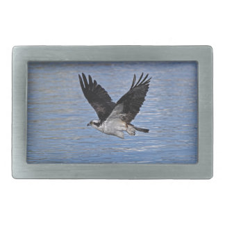 Flying Fish Eagle Osprey Nature Photograph Rectangular Belt Buckle
