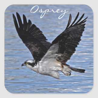 Flying Fish Eagle Osprey Nature Photograph Stickers