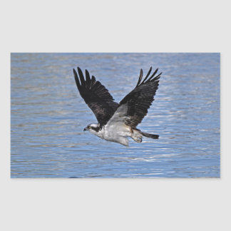 Flying Fish Eagle Osprey Nature Photograph Rectangle Sticker