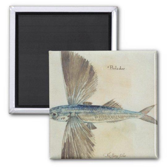 Flying-Fish Magnet