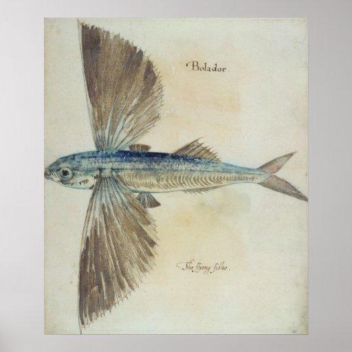 Flying-Fish Print