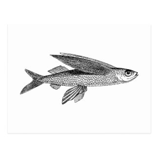 Flying Fish vintage drawing Postcard