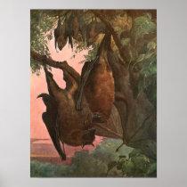 Flying Fox Bats by Austen, Vintage Wild Animals Poster
