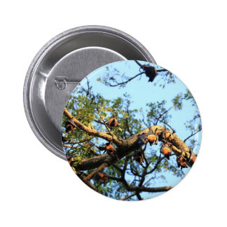 Flying fox fruit bat colony in trees 2 inch round button