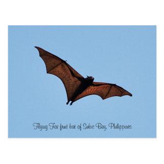 Flying Fox fruit bat of Subic Bay Postcard