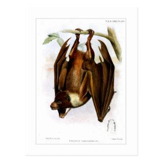 Flying-fox Postcard