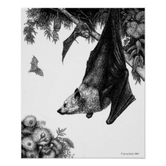 Flying Foxes Poster/Prints Poster