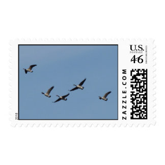Flying Geese Stamp