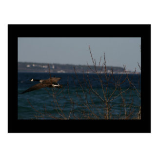 Flying Goose W Mackinac Island Postcard