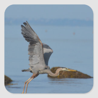Flying Great Blue Heron Square Sticker