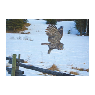 Flying Great Grey Owl and Ranch Fence in Snow Canvas Print