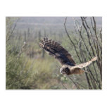 Flying Great Horned Owl Post Cards