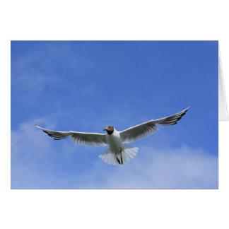 flying gull card