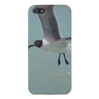 Flying Gull Case For iPhone 5/5S