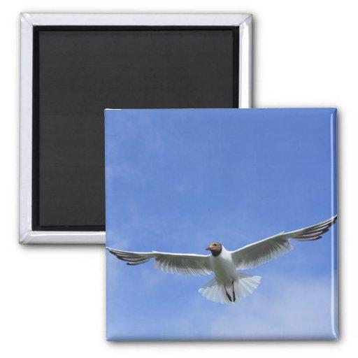 flying gull refrigerator magnets