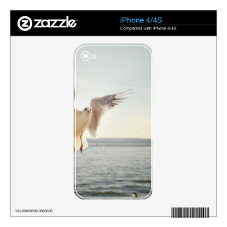 Flying Gull Skin For The iPhone 4S