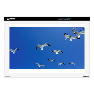 flying gulls decal for laptop