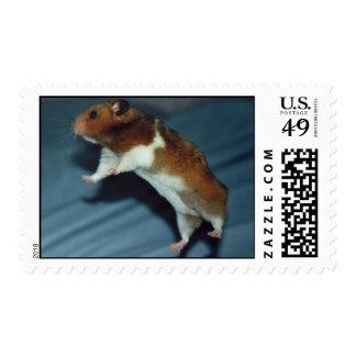Flying Hamster Postage Stamps