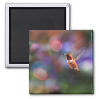 Flying Hummingbird and Colorful Background Magnet