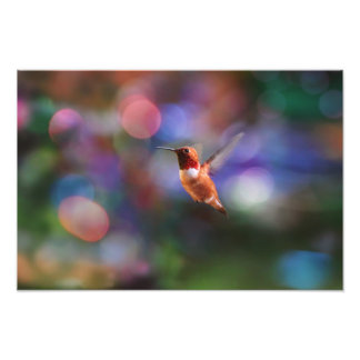 Flying Hummingbird and Colorful Background Photo Print