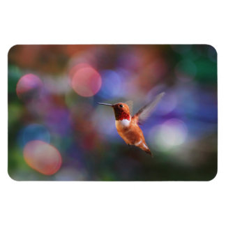 Flying Hummingbird and Colorful Background Vinyl Magnets
