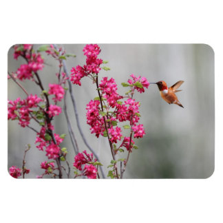 Flying Hummingbird and Flowers Rectangle Magnets