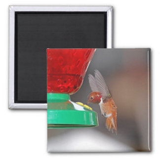 Flying Hummingbird and Hummingbird Feeder Refrigerator Magnet