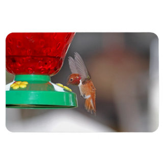 Flying Hummingbird and Hummingbird Feeder Magnet